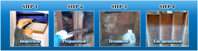 4 stages of mold remediation