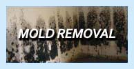 mold removal-nj