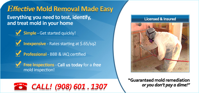 basics of mold removal